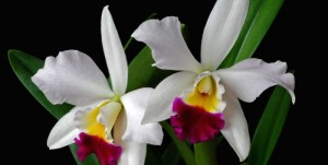 orchid_f-700x352